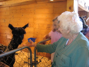 Luina Greine Farms - Alpaca tours for seniors